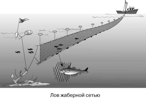 ярусная рыбалка видео