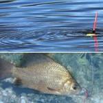 Хороший клев рыбы
