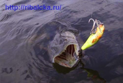 Весенняя рыбалка на щуку, рыбалка весной на щуку