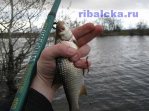 Ловля плотвы на поплавочную удочку, ловля плотвы летом