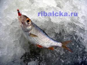 ловля плотвы на водохранилище зимой