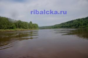 рыбалка на реке Мста
