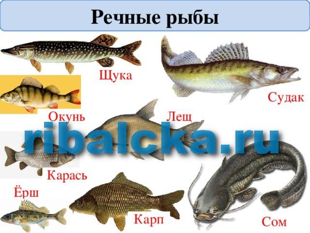 как приготовить свежую речную рыбу